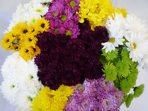 bulk wholesale daisies