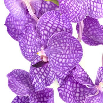 bulk wholesale orchids las vegas