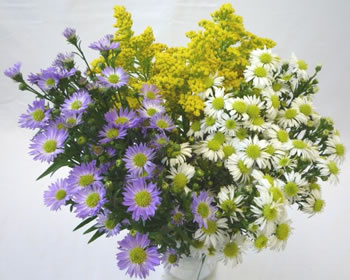 bulk wholesale flowers filler, aster, solidago, baby's breath, limonium