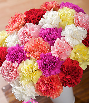 bulk wholesale carnations